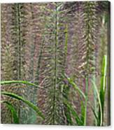 Bottle Brush Grass Canvas Print