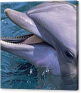 Bottlenose Dolphin Canvas Print