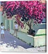Bouganvillaea Canvas Print