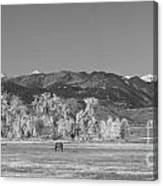 Boulder County Colorado Front Range Panorama With Horses Bw Canvas Print