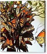 Bouquet Of Butterflies Canvas Print