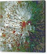 Bouquet Of Snowflakes Canvas Print