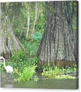 Bow Legged Egret Canvas Print