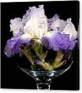 Bowl Of Iris Canvas Print