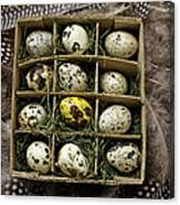 Box Of Quail Eggs Canvas Print