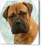 Boxer 493 Canvas Print