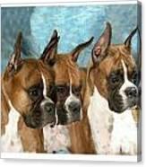 Boxer 655 Canvas Print