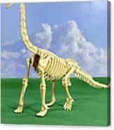 Brachiosaurus Dinosaur Skeleton Canvas Print