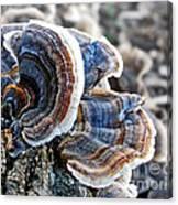 Bracket Fungi - Fungus Canvas Print