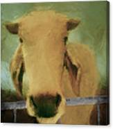 Brahma Cow Greeting Canvas Print