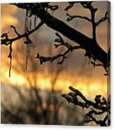 Branches in January Canvas Print
