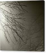 Branches In The Fog Canvas Print