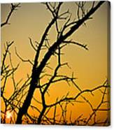 Branches Reaching The Sunset Canvas Print