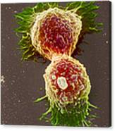Breast Cancer Cells Canvas Print