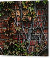 Brick And Ivy Canvas Print