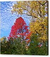 Bright Autumn Color Canvas Print