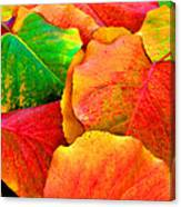 Bright Beautiful Fall Leaves Canvas Print