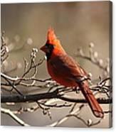 Bright Bold - Cardinal Canvas Print