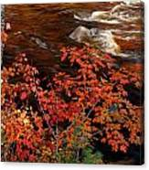 Bright Leaves At Swift River Canvas Print