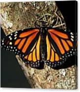 Bright Orange Monarch Butterfly Canvas Print