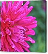Bright Pink Dahlia Canvas Print