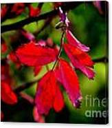 Bright Red Canvas Print