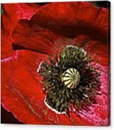 Bright Red Poppy Canvas Print