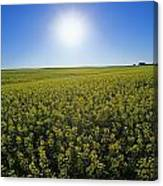 Bright Sun And Bloom Stage Mustard Canvas Print