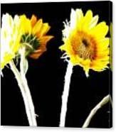 Brighten Your Day Canvas Print