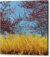 Brightly Comes The Spring Canvas Print