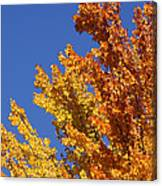 Brilliant Fall Color And Deep Blue Sky Canvas Print