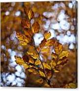 Brilliant Leaves Canvas Print