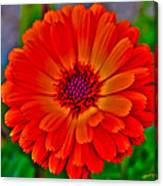 Brilliant Orange No. 2 Canvas Print