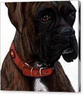 Brindle Boxer Canvas Print