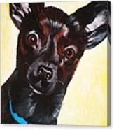 Brindle Chihuahua Ears Canvas Print