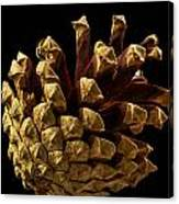 Close Up Of Pinecone Canvas Print