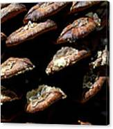 Bristle Pine Cone Canvas Print