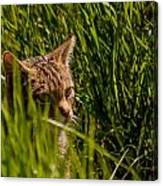 British Wild Cat Canvas Print