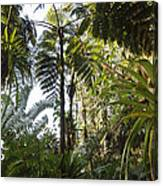 Bromeliad And Tree Ferns  Canvas Print