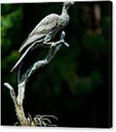 Bronze Cormorant Canvas Print