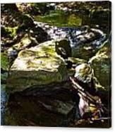 Brook Fall 31 Canvas Print