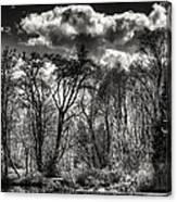 Brook Lake In The West Hylebos Wetlands Canvas Print