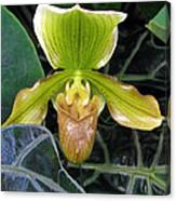 Brown And Green Orchid Amid Leaves Canvas Print