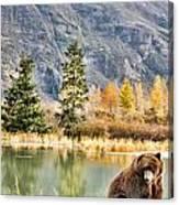 Brown Bear 206 Canvas Print