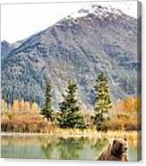 Brown Bear 207 Canvas Print