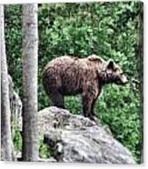 Brown Bear 208 Canvas Print