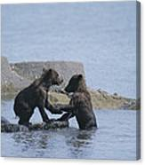 Brown Bear Cubs Playing On A Rocky Canvas Print