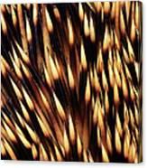Brown-breasted Hedgehog Erinaceus Canvas Print
