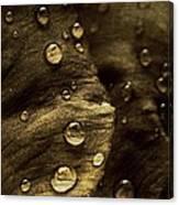 Brown Drops Of Rain Canvas Print