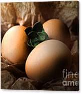 Brown Easter Eggs Canvas Print